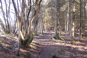 Trees in Templeton Woods