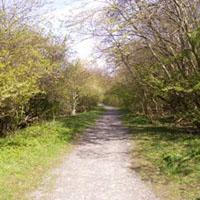 Broughty Ferry Local Nature Reserve Image
