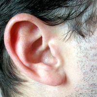 Tayside Deaf Hub Image
