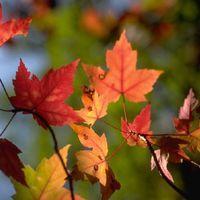 An Autumn Concert - Dundee Gaelic Choir Image