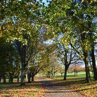 Dawson Park Image