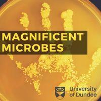 Magnificient Microbes Image