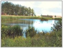 Ardler Village Duck Pond