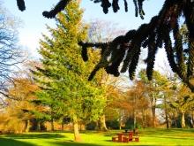 Picnic bench in Camperdown Park
