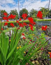 Slessor Gardens Flowers
