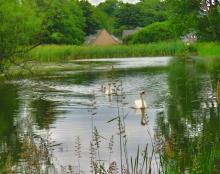 Trottick Mills Ponds