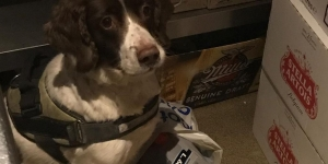Dixie the Dog Helps in Drive to Stub Out Illegal Tobacco Image